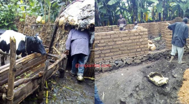 Rubavu: Umuryango wabanaga n'amatungo mu nzu ya Nyakatsi watangiye kubakirwa (Amafoto)