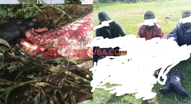 Rubavu: Abashumba bafashwe bamaze kwica inka y'umuturage (Amafoto)
