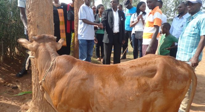 Kicukiro: Abaturage bo mu Mudugudu wa Amahoro basuye Urwibutso rwa Ntarama, bagabira inyana uwarokotse Jenoside